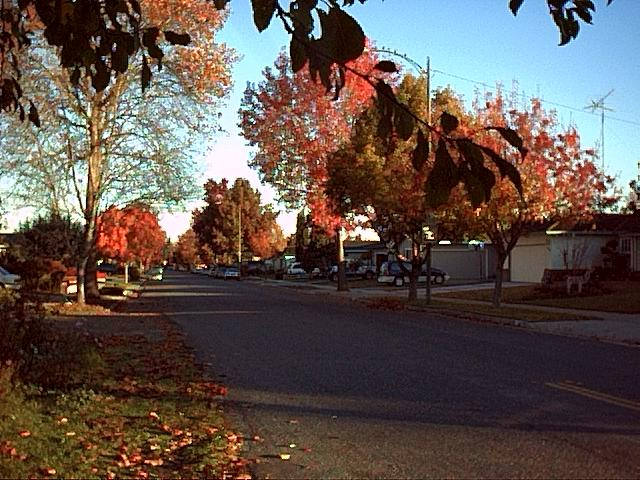 Image or picture of fall folliage on a residential street.