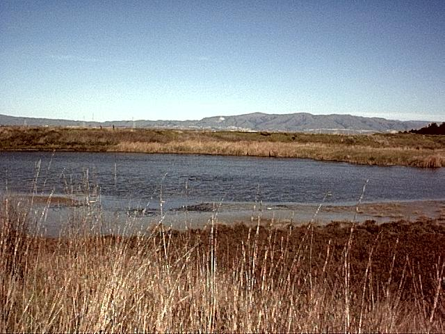 Image or picture of Shoreline Park, Santa Clara County